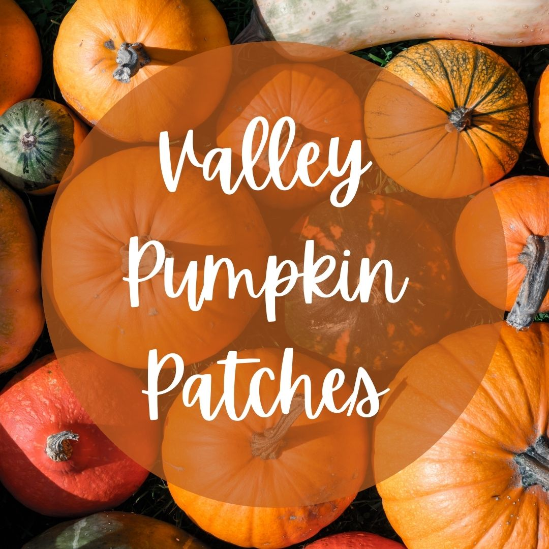 Valley Pumpkin Patches 🎃